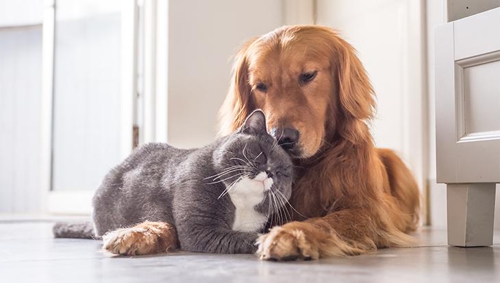 ziektekostenverzekering voor huisdieren